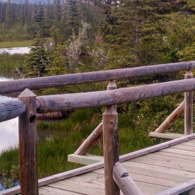 Bow River Campground - August 2014