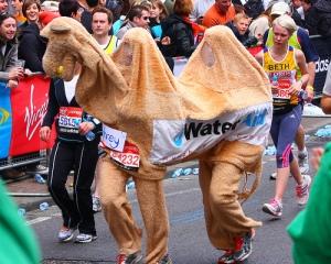 camel-costume
