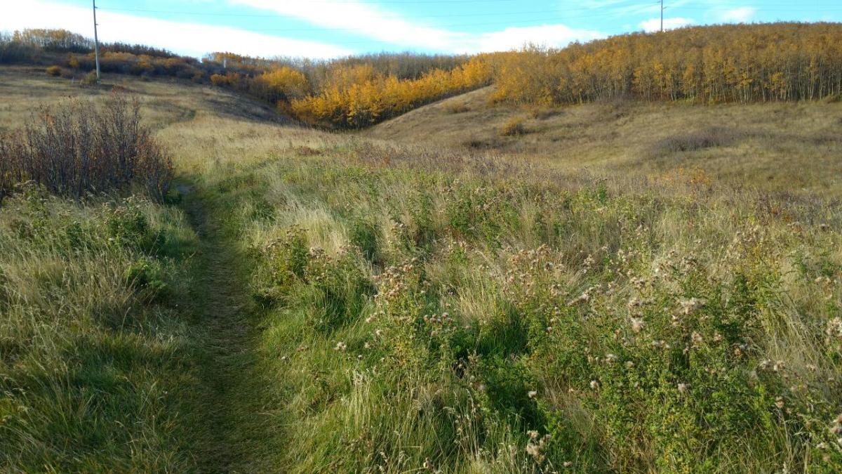 Trail Feature – Nosehill ParkCircuit